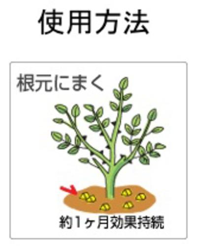 バイオゴールドセレクション薔薇 photo2